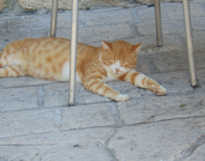 cute cat, pet, cats in afytos, cats in greece