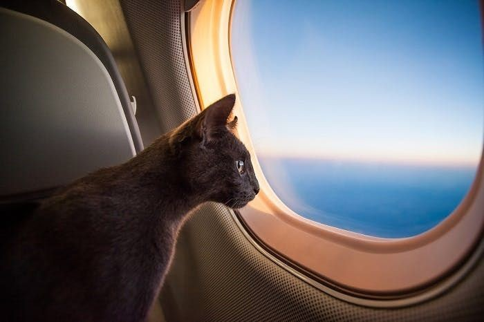 Cat traveling